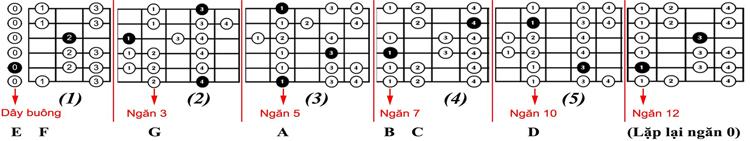 5-mau-am-giai-scale-c